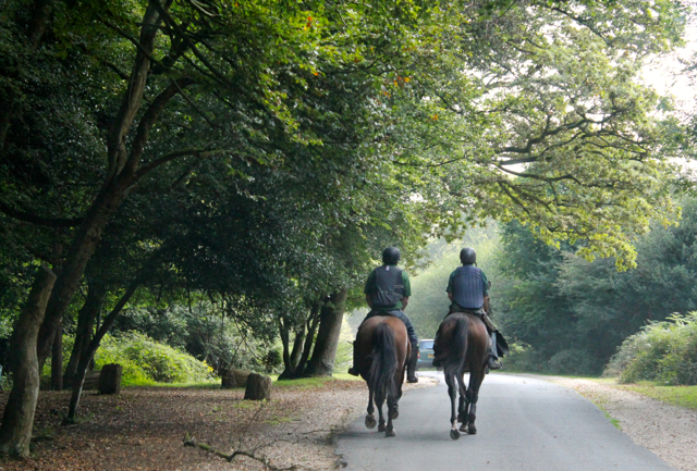 Riding in the New Forest is one of the best ways to experience the landscape.