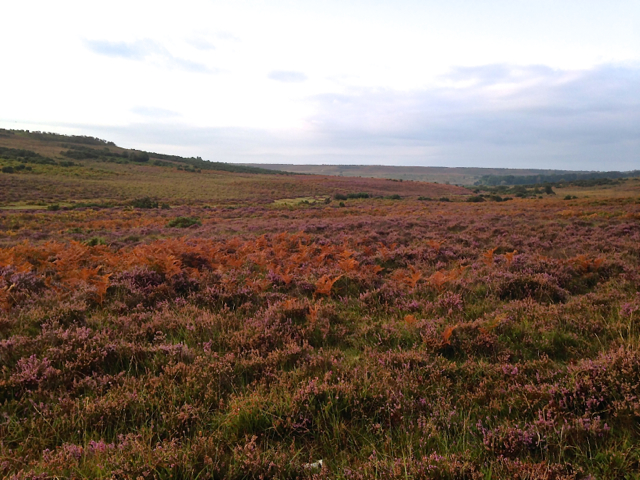 The colours that nature paints across the New Forest landscape in autumn are just beautiful.