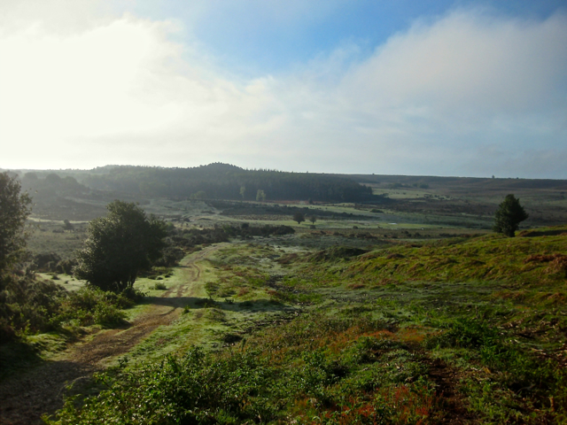 The New Forest is a landscape of irreplacable habitats that supports a diversity of wildlife.