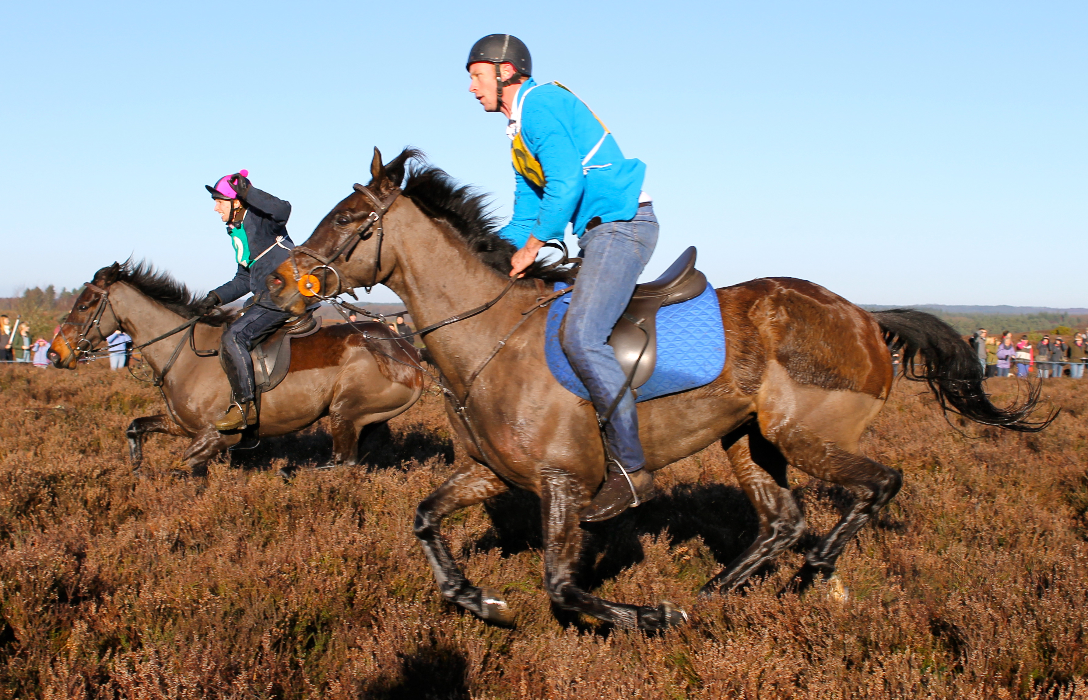 New Forest ponies are versatile and can turn their 'hoof' to any task, including racing.