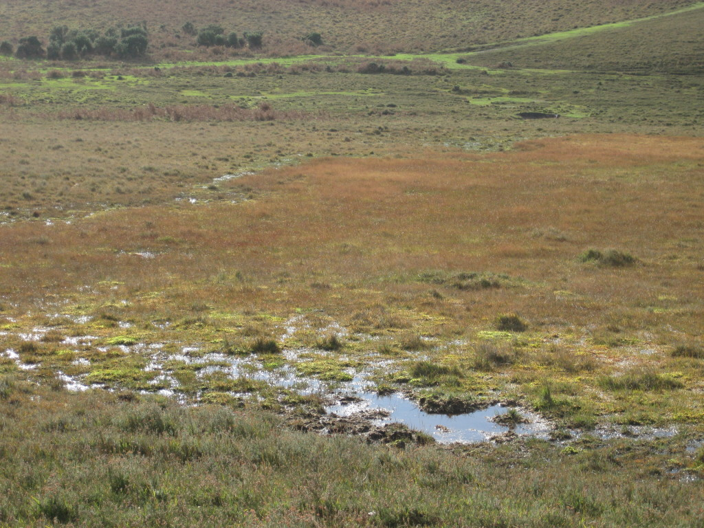 The bogs and valley mires are important New Forest habitats.