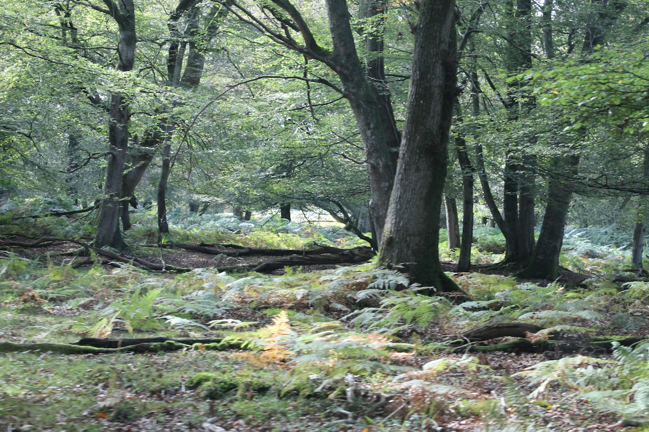 The New Forest offers plenty of opportunity to experience nature's 'green gym'.