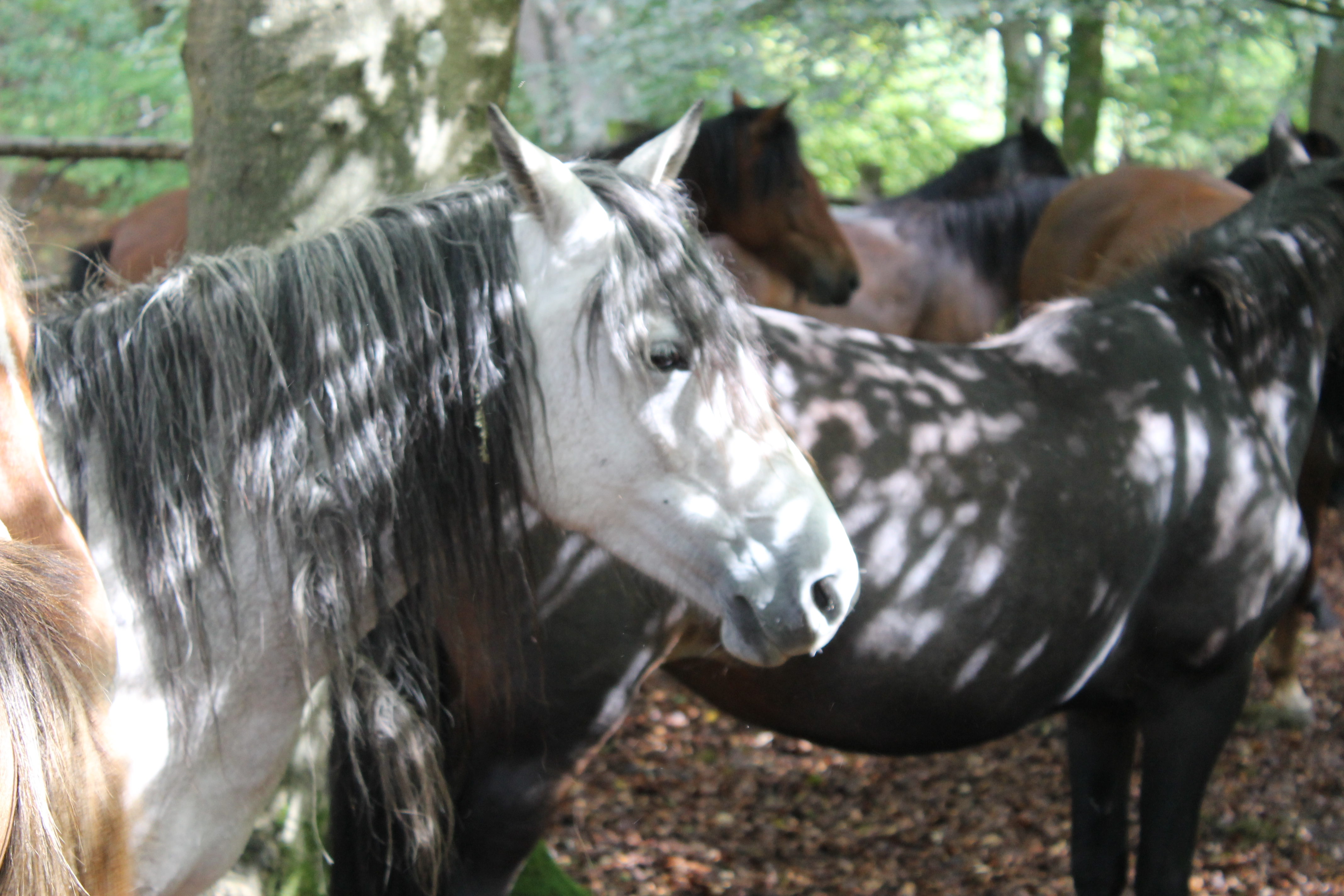 In the heat of the day the ponies seek relief in areas known as 'shades' but not all of there are under trees.