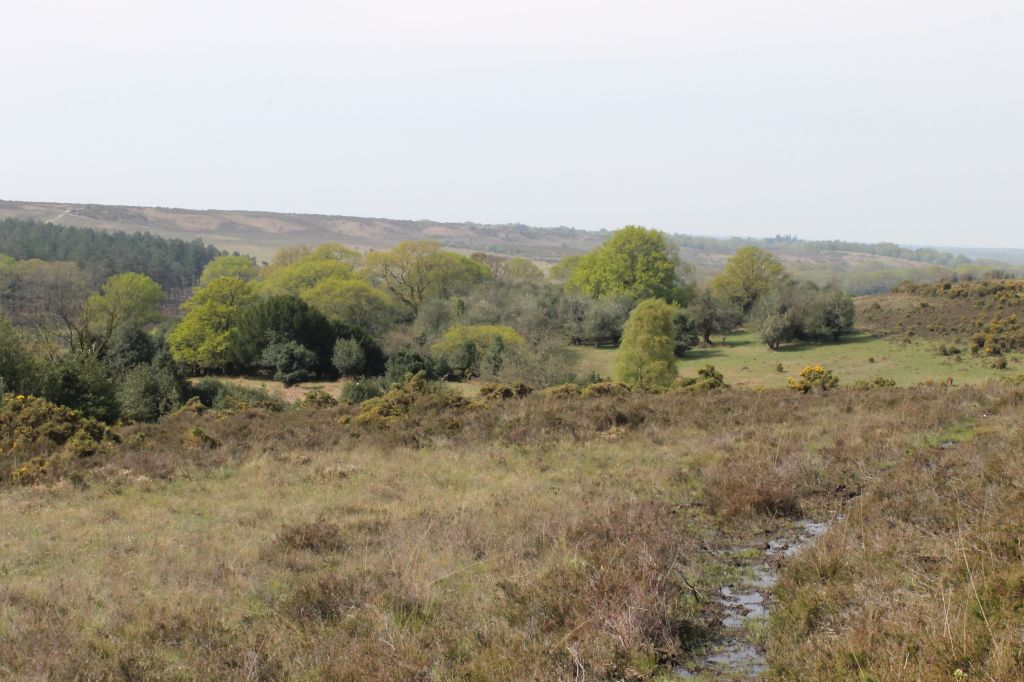 The New Forest contains streams, ponds, and mires, as well as coastal saltmarshes that are among the most important habitats in Europe.