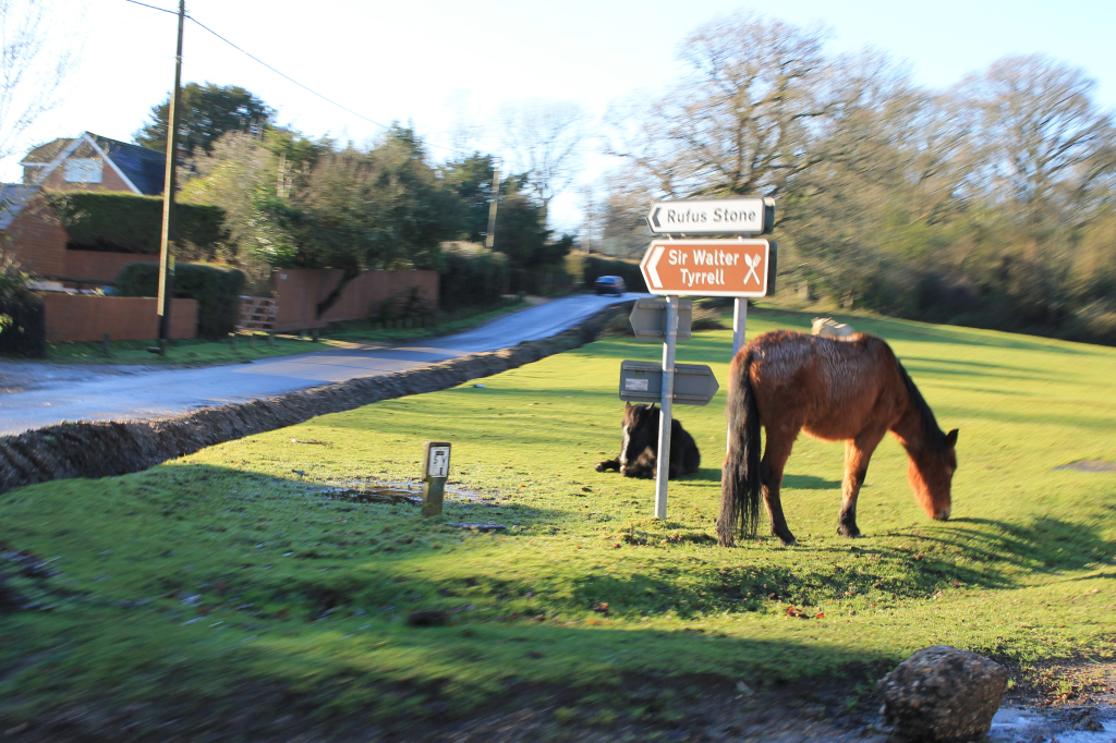 The New Forest ponies are free to roam and like other travellers use the roads to get from A to B.