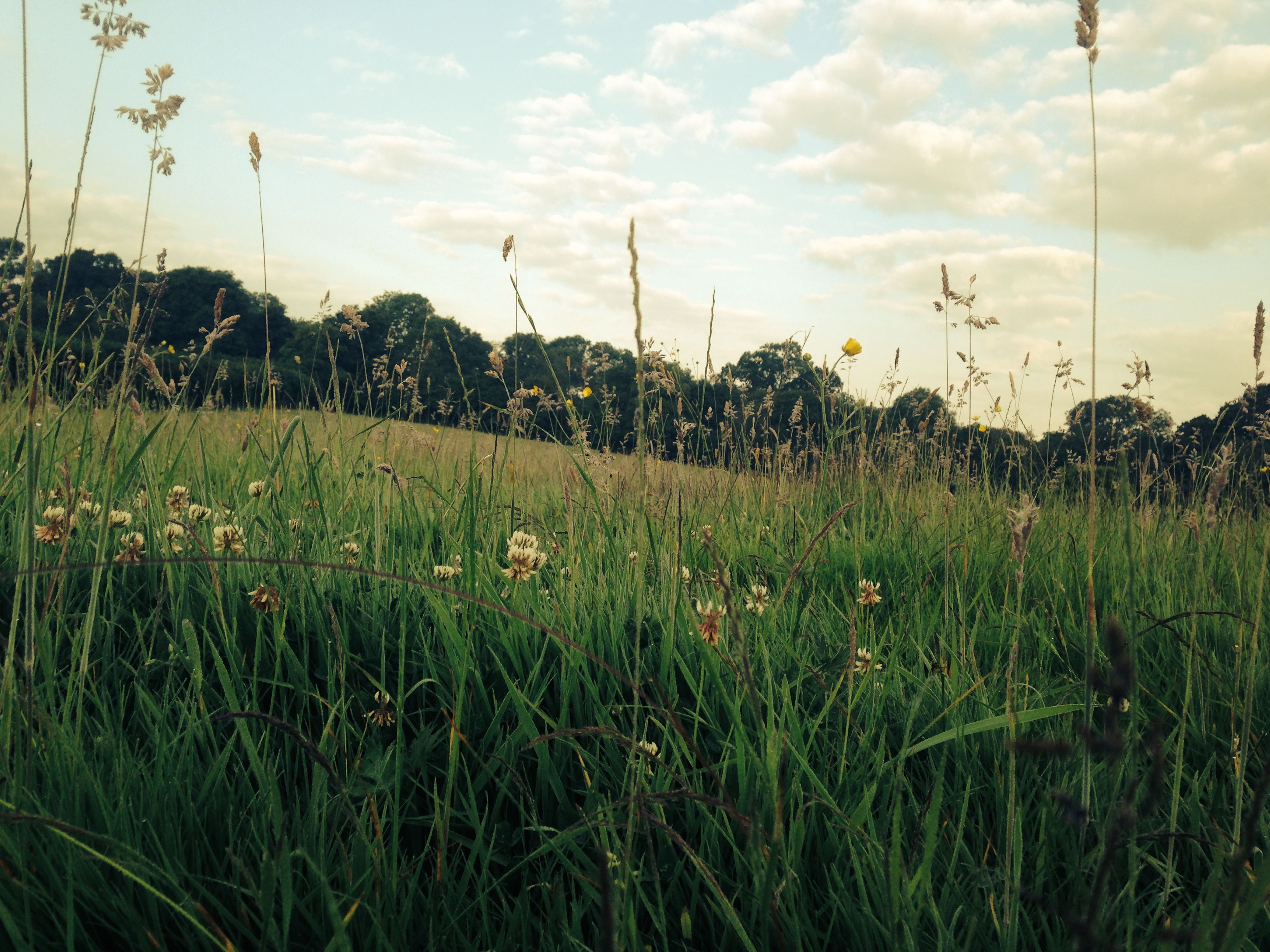 Meadow grass contains essential nutrients that, when dried in hay, will keep the ponies sustained over the winter.
