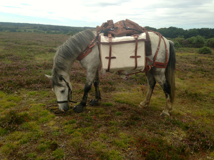 The New Forest pony was an important part of the smugglers supply chain, carrying contraband either in packs or on wagons from the coast to meeting places in the Forest where the booty was then distributed.