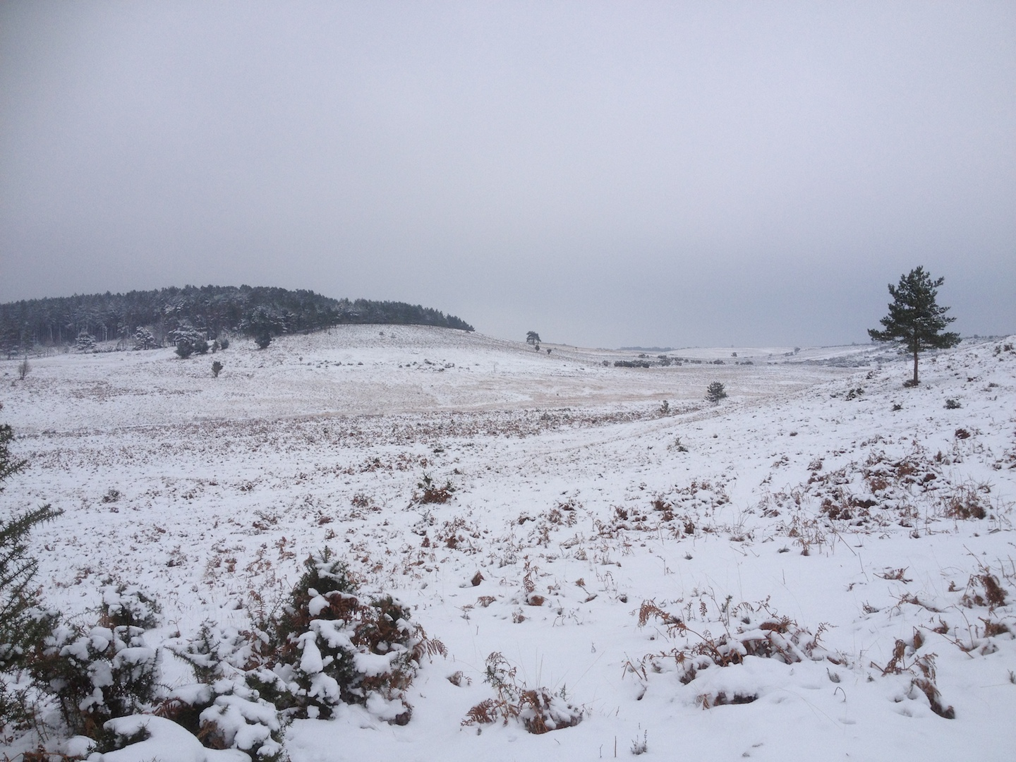 In the winter the New Forest can seem an inhospitable landscape.