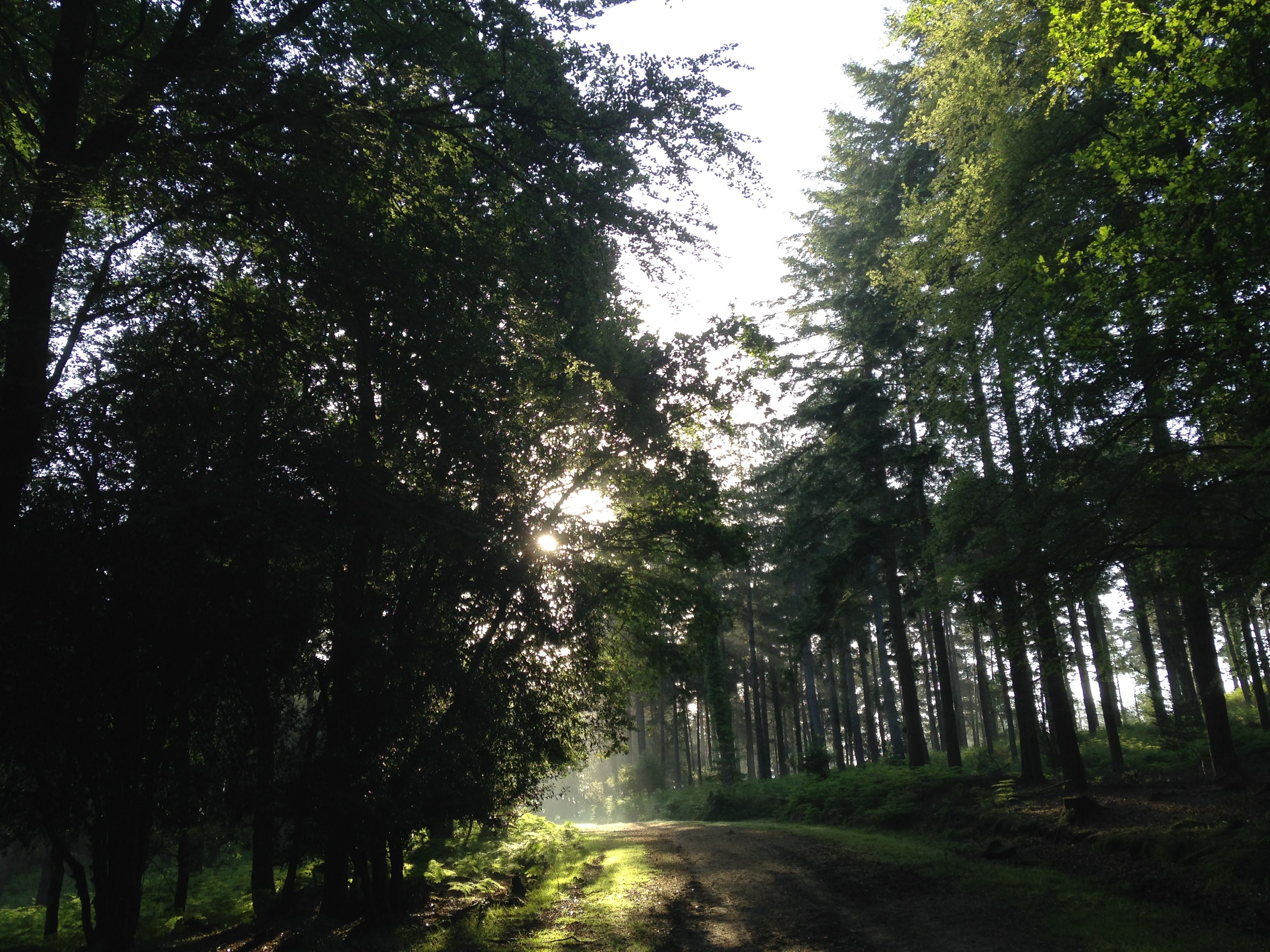 The New Forest has 13.5 million day visits each year.