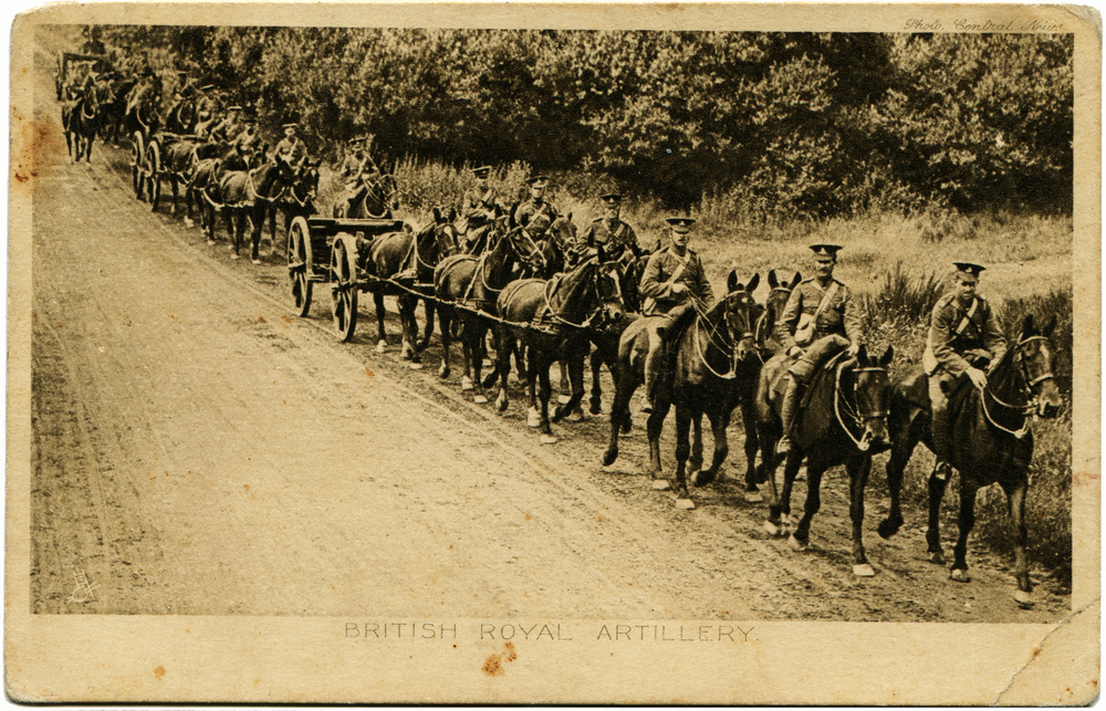 Many New Forest ponies saw active service in the Great War.