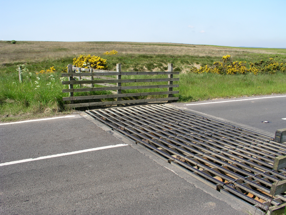 Cattle grids are commonly used on the New Forest to keep animals within the boundary or out of people's property.