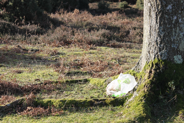 Discarded plastic bags are a danger to Forest livestock and wildlife.