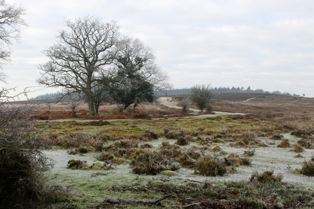 The New Forest is a stunning landscape even in the bleak wintertime.