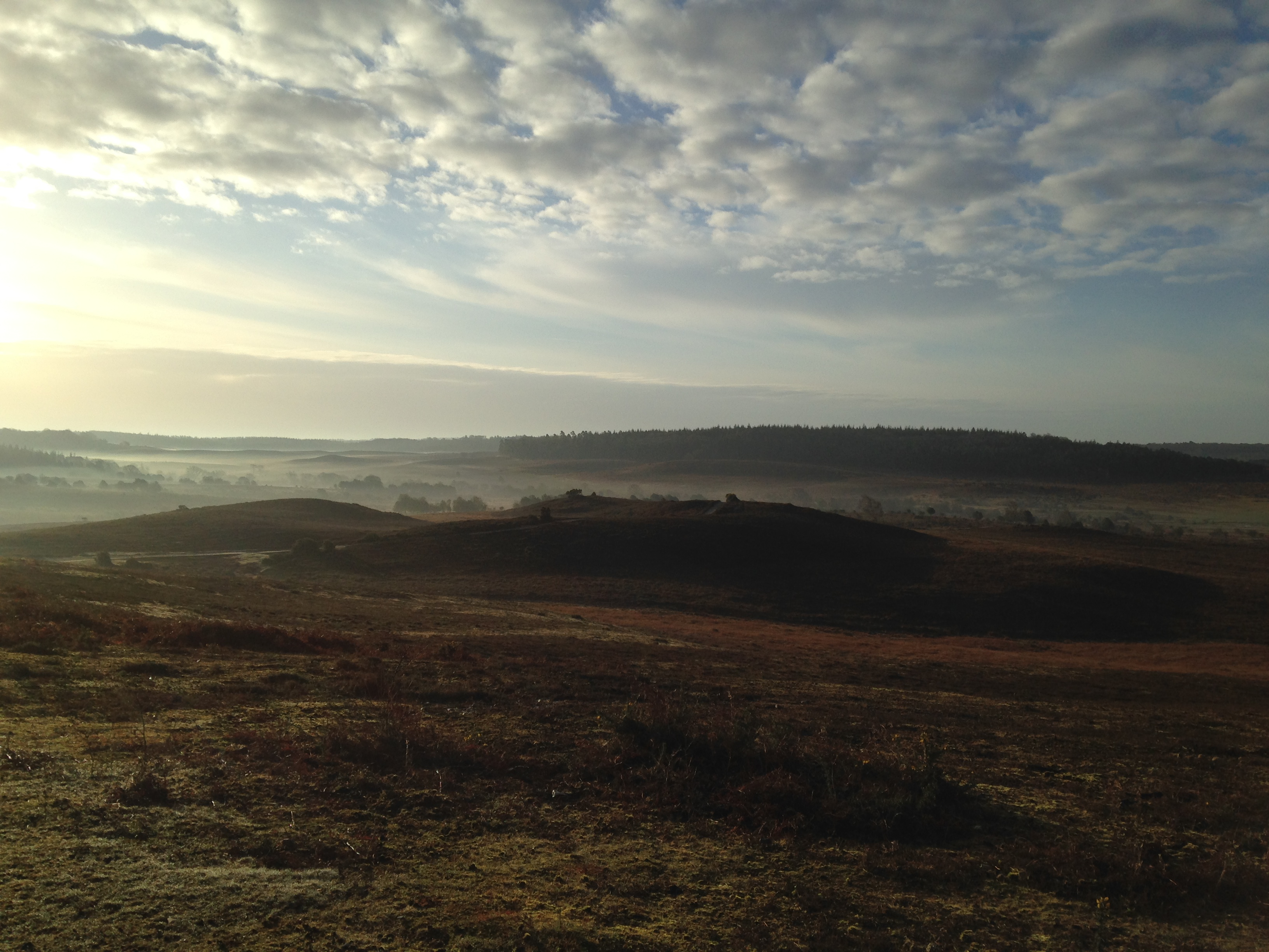 The New Forest swathed in dawn mist is a sight that rewards the early risers.