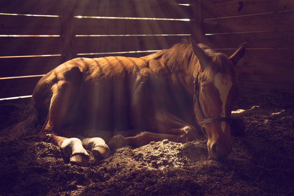 Treatment for 'strangles' includes isolation, which to a 'wild' free-roaming New Forest pony is not an option.