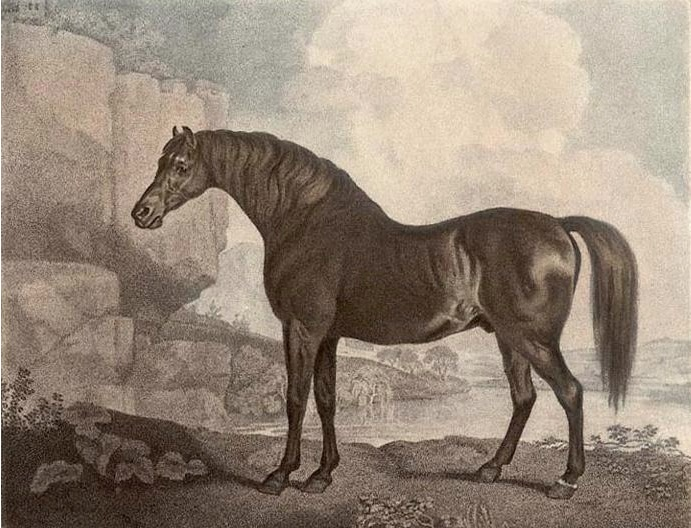 Marske was used as a Forest stallion for four years and was the sire of the legendary racehorse Eclipse.