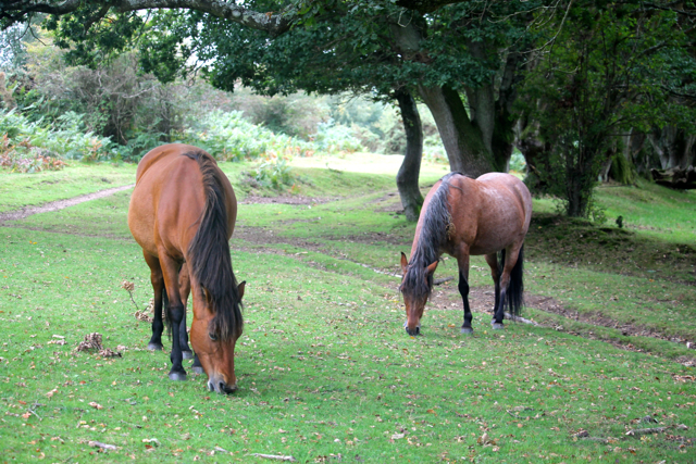 Living 'wild' means that ponies cannot be managed in the same way as domesticated horses and ponies but they are managed nonetheless.