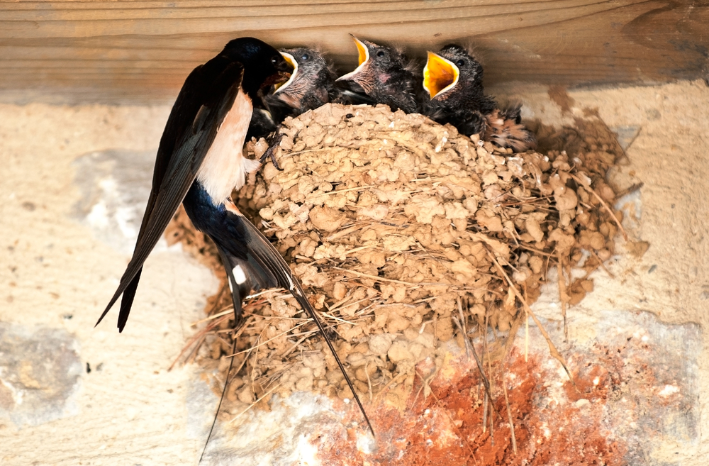 Swallows, the heralds of summer, are welcome visitors to the New Forest.