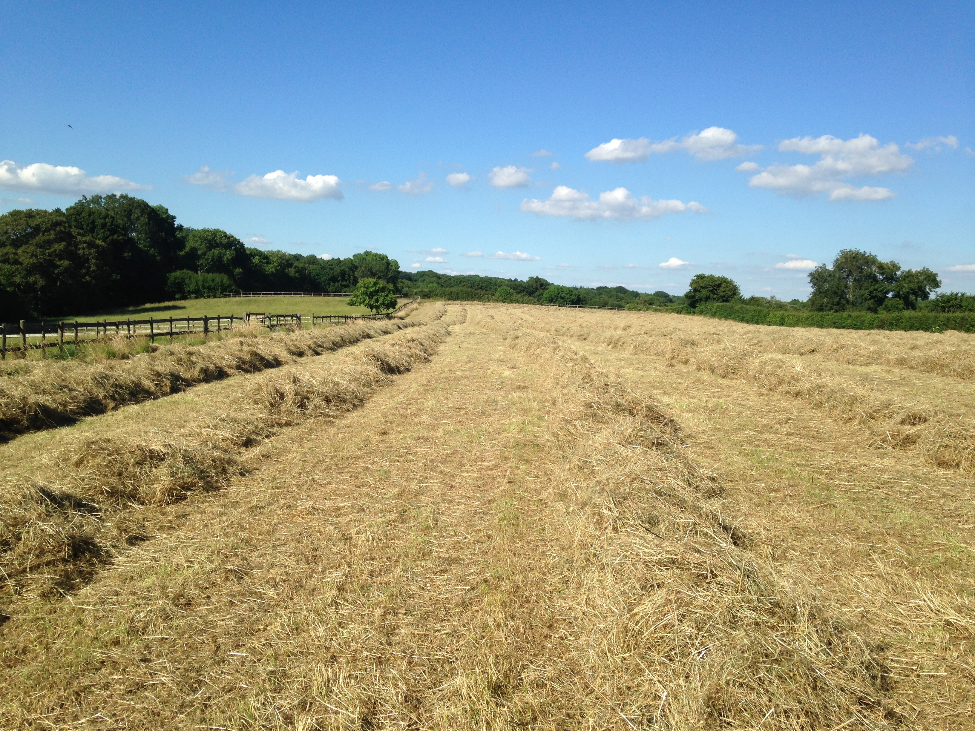 The smell of good meadow hay is one of the best aromas of the countryside.