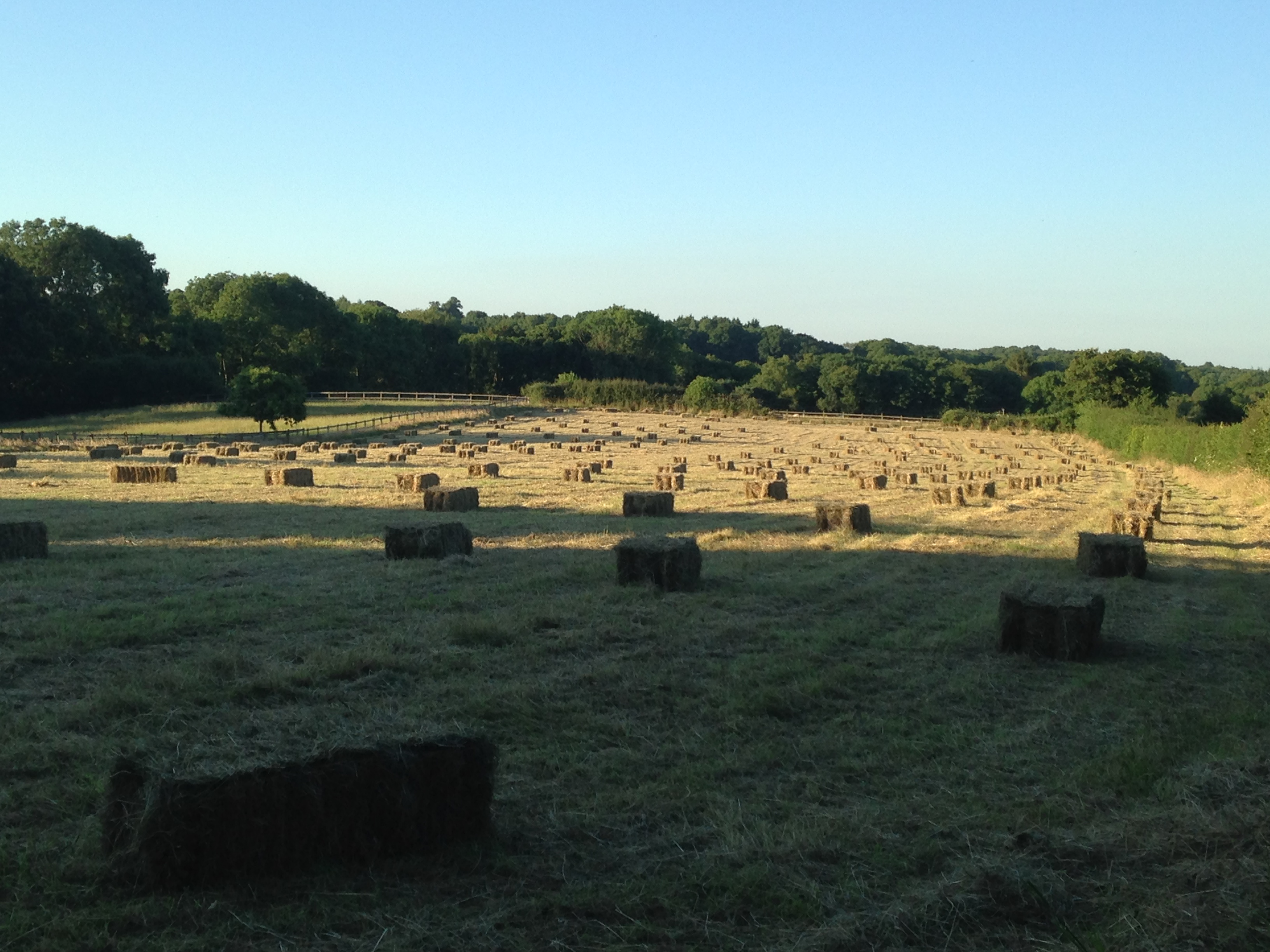 The hay bales are neatly laid out ready for collection.