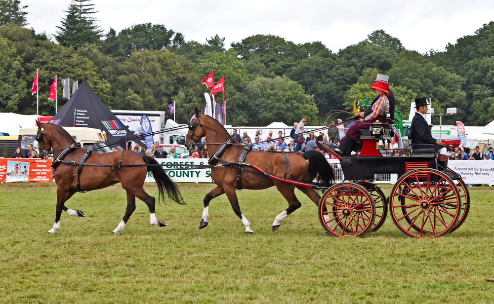 The New Forest & Hampshire County Show has something for everyone.