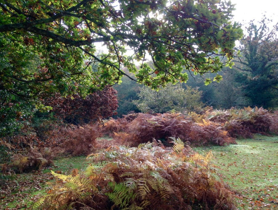 Late autumn in the New Forest is filled with colour.